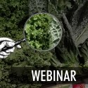 "Kale on a shelf, with magnifying glass superimposed, and ""webinar"" written atop image"